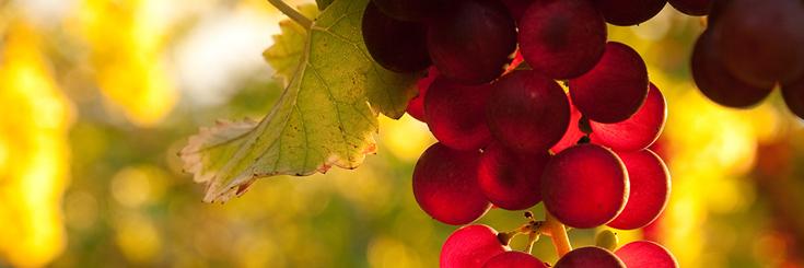 Glace carbonique pour milieu vinicole grand ouest pour les vendanges